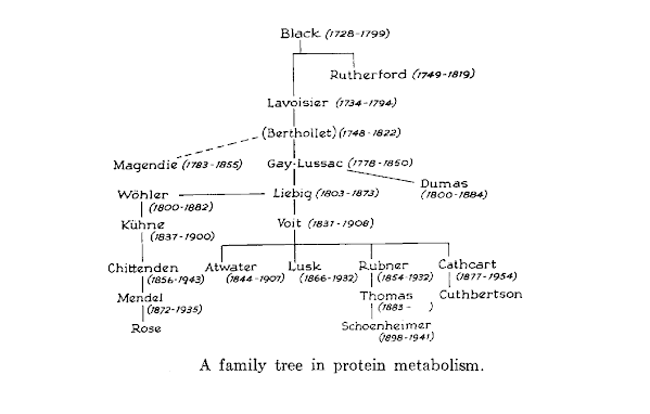 Family Tree of Protein Metabolism.png