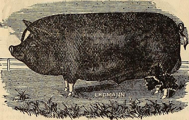 Burpee's_farm_annual_(1882)_(19888961623).jpg