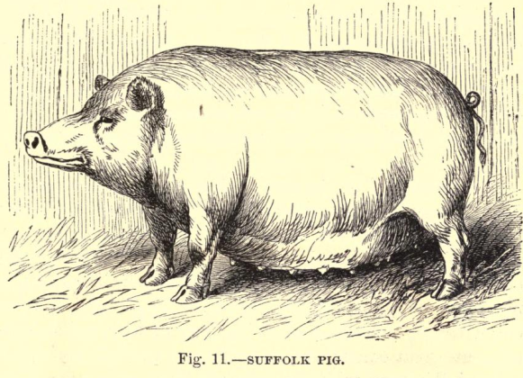 pig 2.7.png
