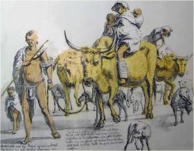 khoi-cattle-and-sheep