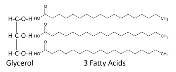 glycerol and three fatty acids